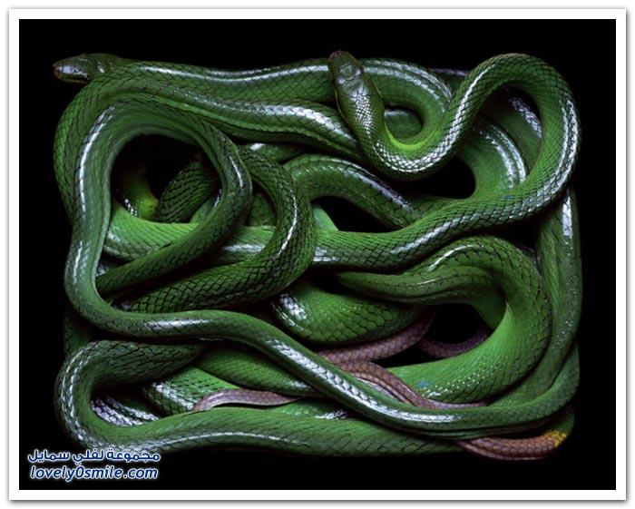صور الثعابين للمصور السويسري غيدو