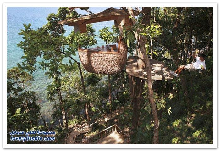 مطعم على رأس شجرة في منتجع سونيفا كيري في تايلاند