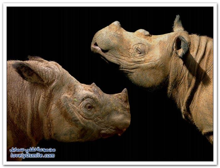 بعض أنواع من الحيوانات النادرة