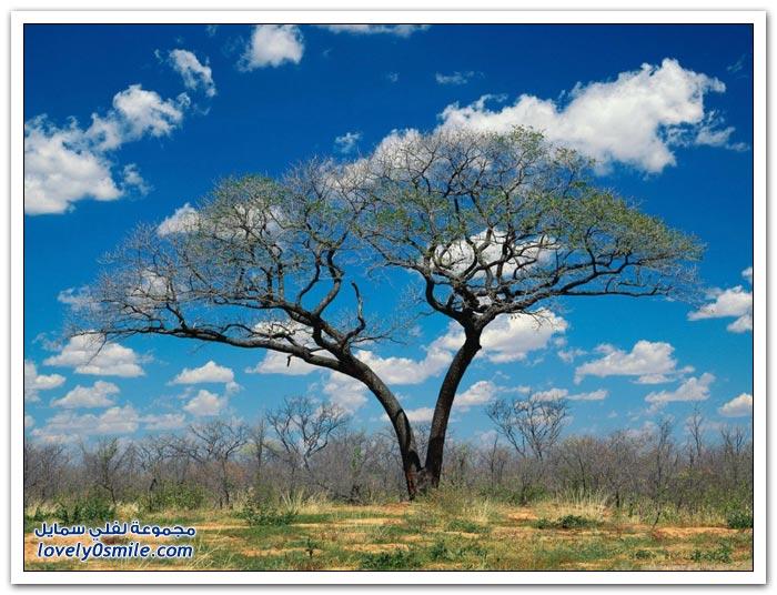 أنواع وأشكال من الأشجار حول العالم