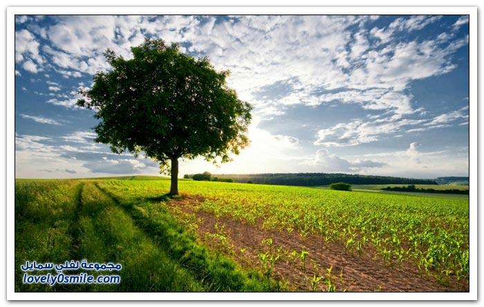عندما تكون الشجرة وحيدة