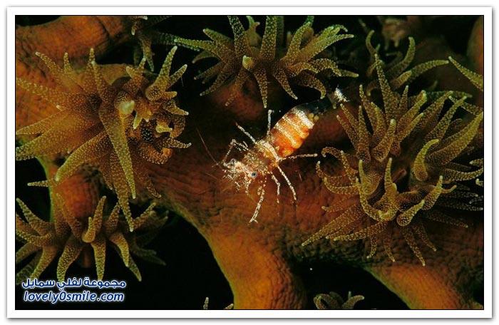 الكائنات الحية في أعماق البحار ج3