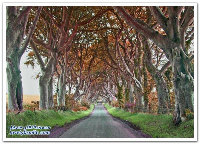 طريق في ايرلندا الشمالية يشبه نفق الحب في أوكرانيا