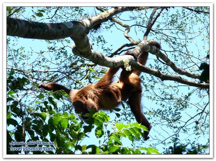صور حيوانات من غابات ساو باولو