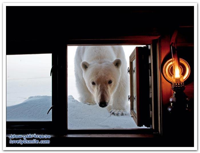 أفضل صور من ناشيونال جيوغرافيك في شهر مايو ج1