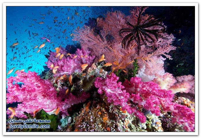 أفضل الصور الفوتوغرافية تحت الماء 2012