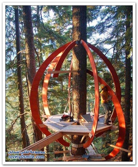 بناء غرفة فوق الشجرة