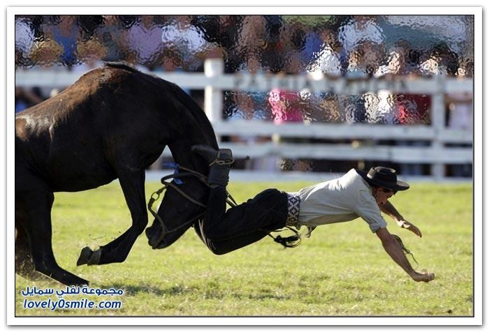 مهرجان ركوب الخيول البرية في أمريكا الجنوبية