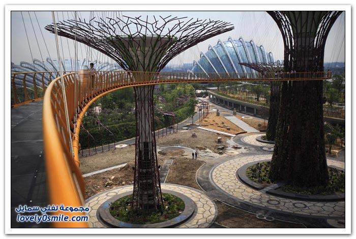غابة الأشجار الشاهقة في سنغافورة