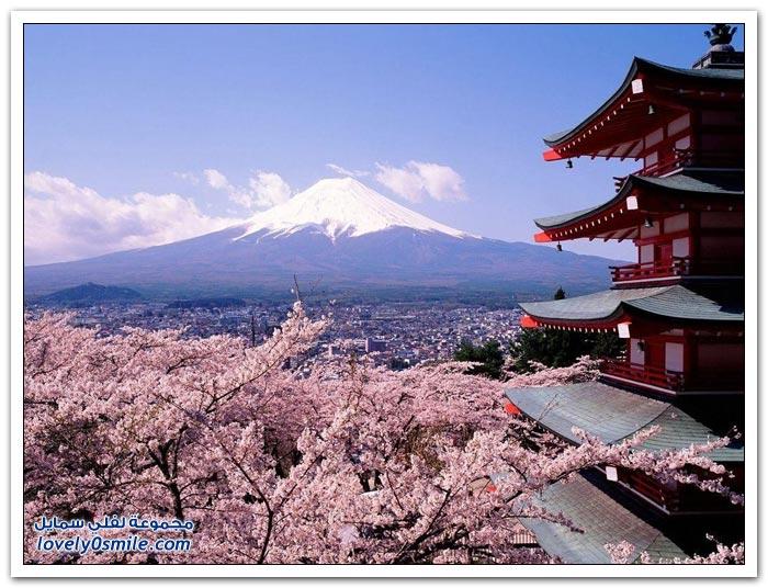 صور رائعة لأزهار الكرز لعام 2012