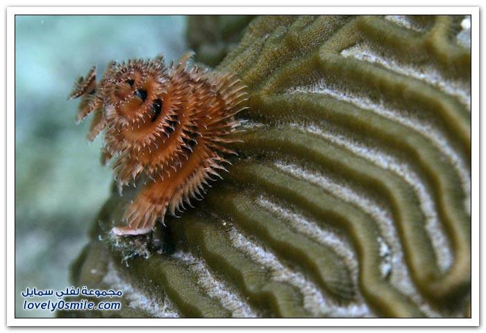 صور من أعماق خليج المكسيك