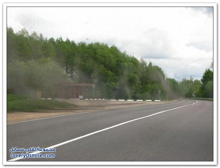 غزو البعوض لقرية في روسيا البيضاء