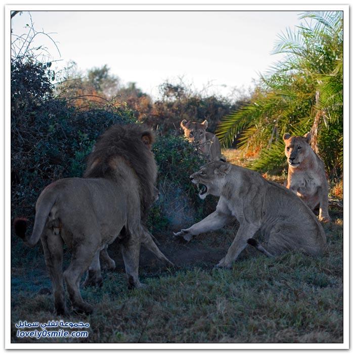 صور من البرية في أفريقيا