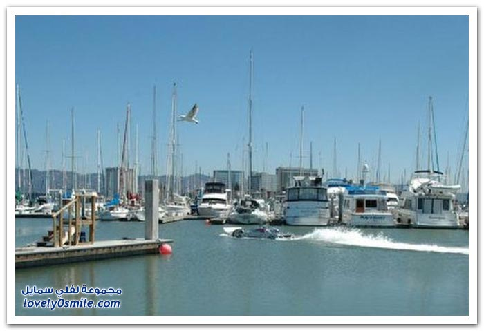 أسد البحر البرمائي 2012