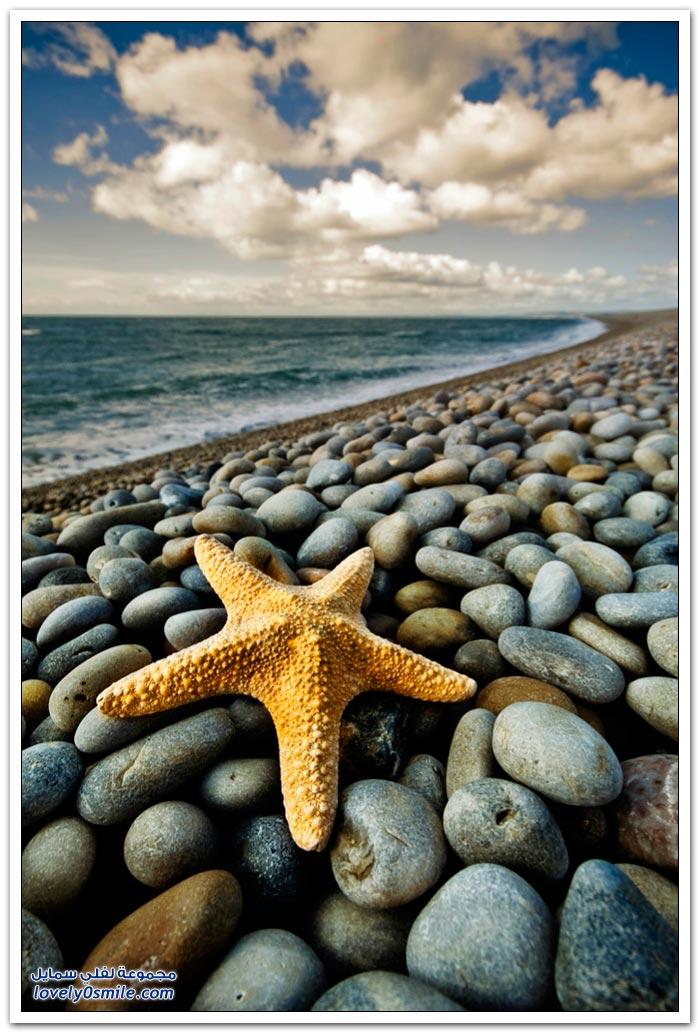 طباعة رسالة > نجوم البحر في صور