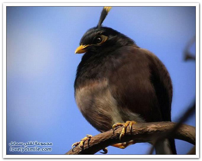 أغرب 10 صور لطيور غاضبة