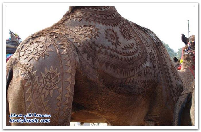 مسابقة أجمل الجمال في ولاية راجستان الهندية