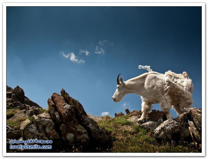 أفضل صور من ناشيونال جيوغرافيك في شهر حزيران ج2