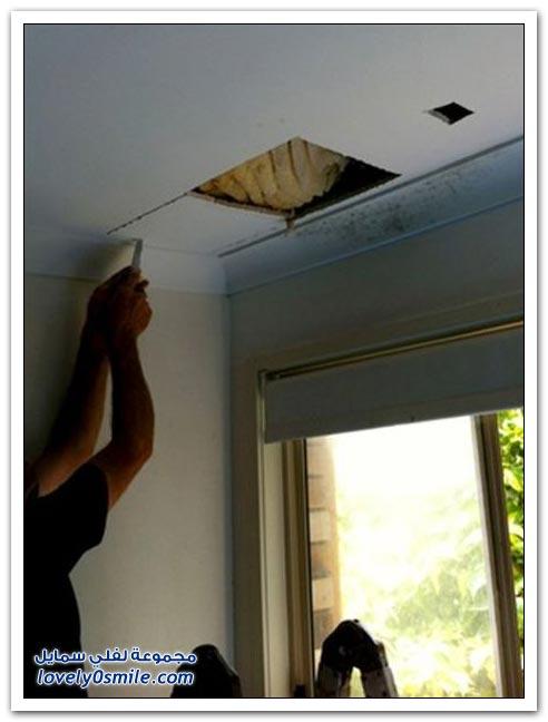 صور وفيديو: سقف غرفة يتحول لبيت نحل