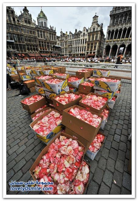 سجاد من الورود في مدينة بروكسل