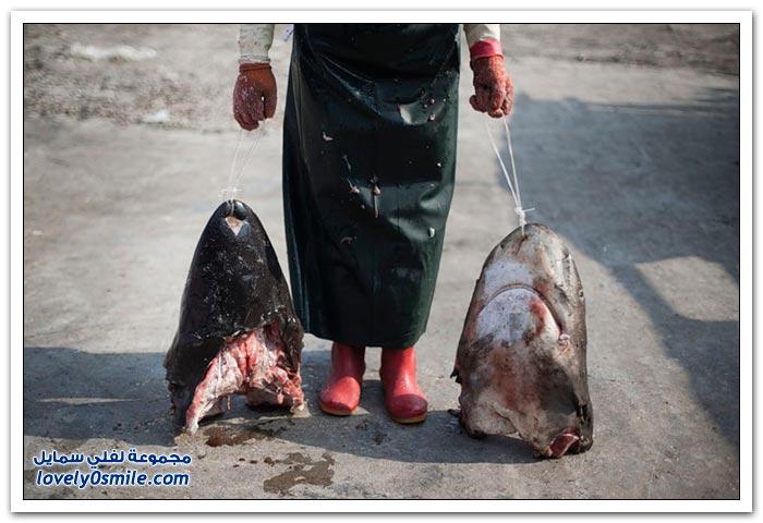 سوق زعانف سمك القرش في الصين