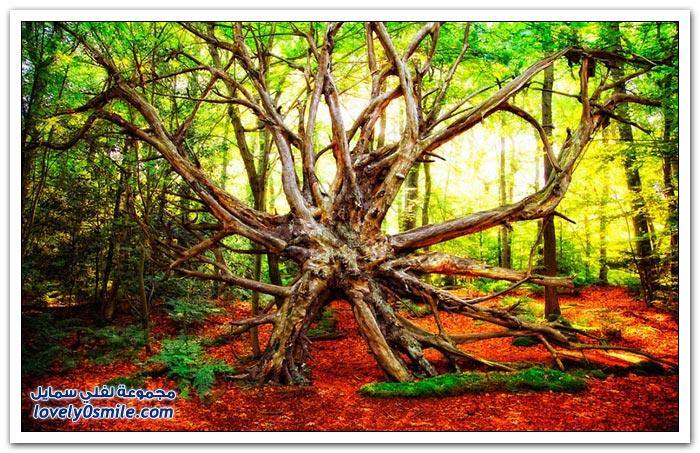 المناظر الطبيعية للغابات للمصور الهولندي لارس فان دي
