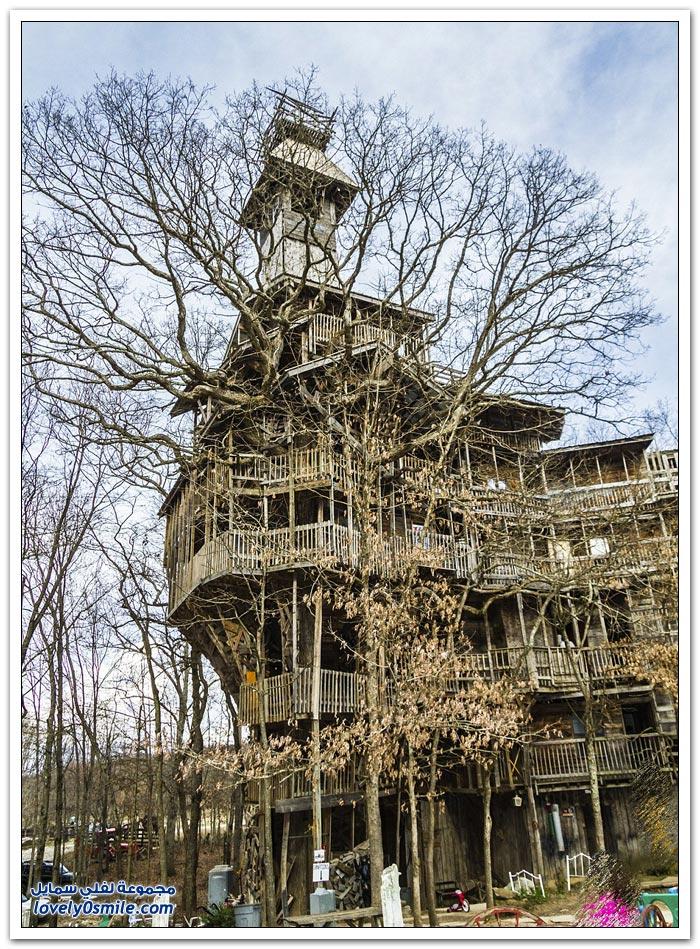 منزل على الأشجار في أحد غابات سويسرا