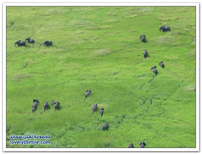 صور من أفريقيا