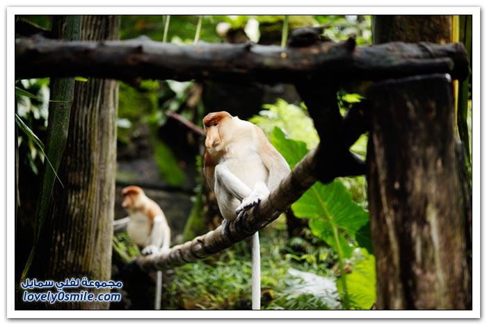 حديقة الحيوان في سنغافورة