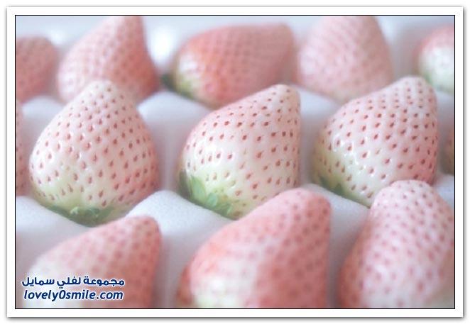 فراولة بيضاء