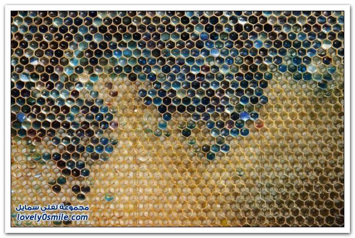 أحد ألوان العسل في فرنسا