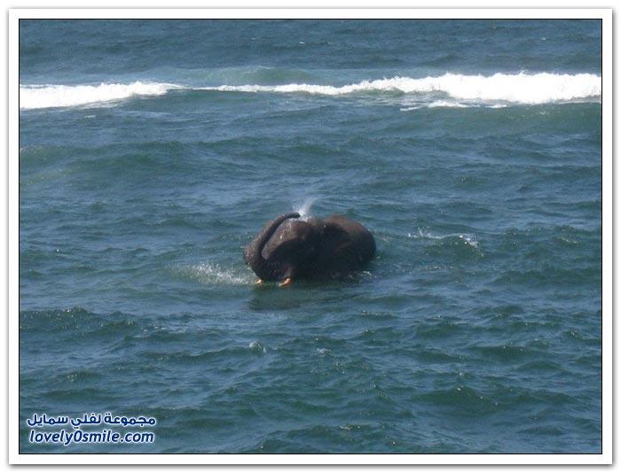فيل متحمس يسبح في البحر