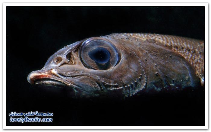 سكان أعماق المحيطات