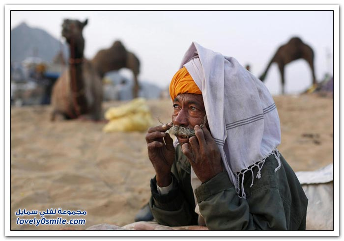 المهرجان السنوي للإبل في مدينة بوشكار في راجستان، الهند