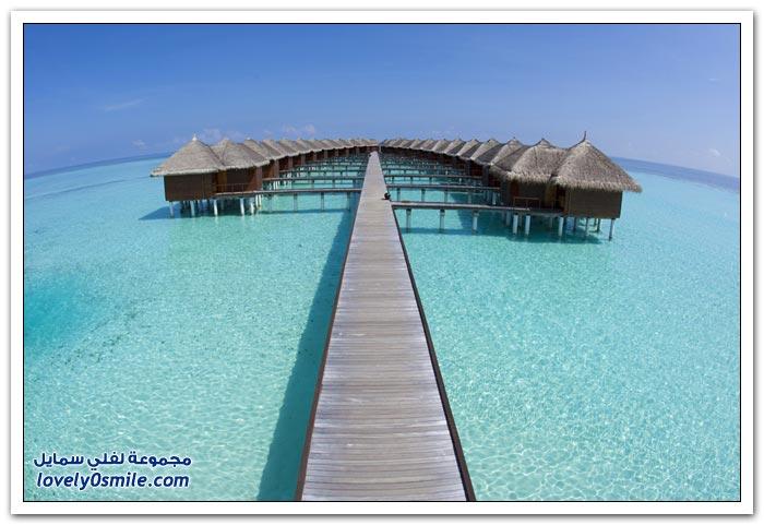 فندق Maafushivaru في جزر المالديف