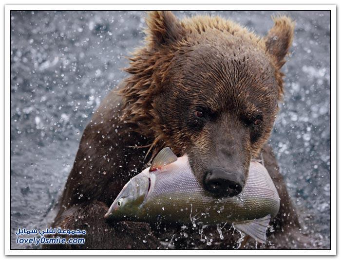 أفضل الصور من ناشيونال جيوغرافيك روسيا في أكتوبر 2012