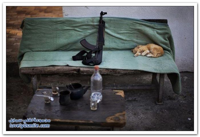 أفضل صور الحيوانات لعام 2012