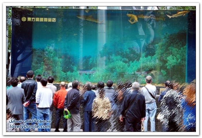 تحطم حوض لأسماك القرش في مركز تسوق في الصين