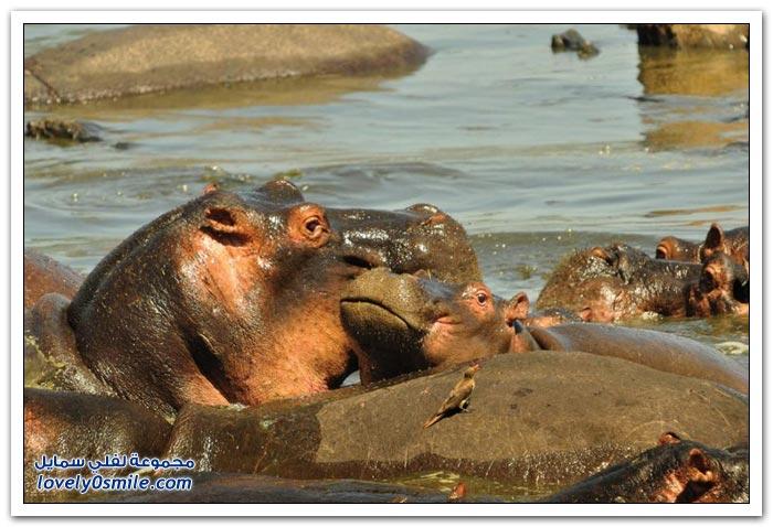 الحيوانات المهددة بالانقراض