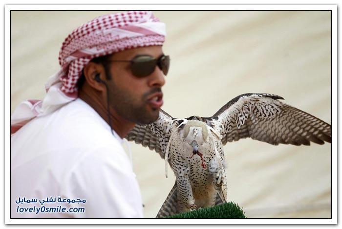الصيد بالصقور في أبوظبي