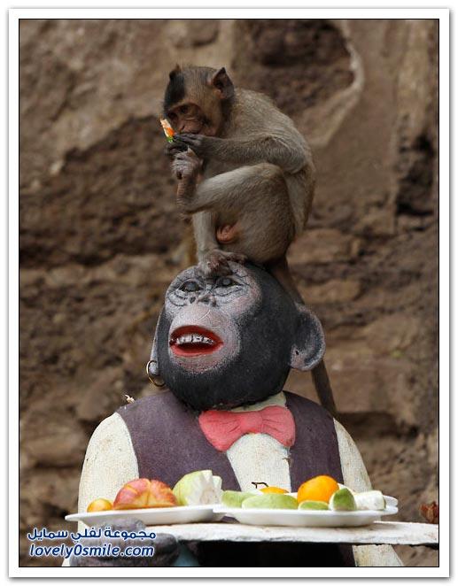 عيد القرود في تايلاند