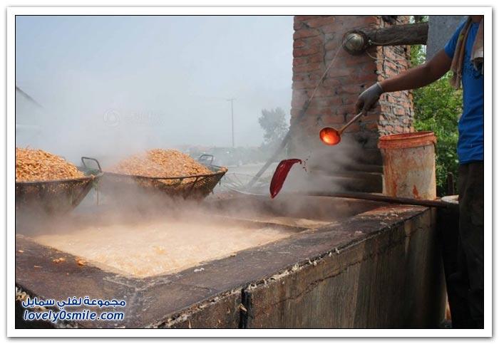 الجمبري في مقاطعة شاندونغ الصينية