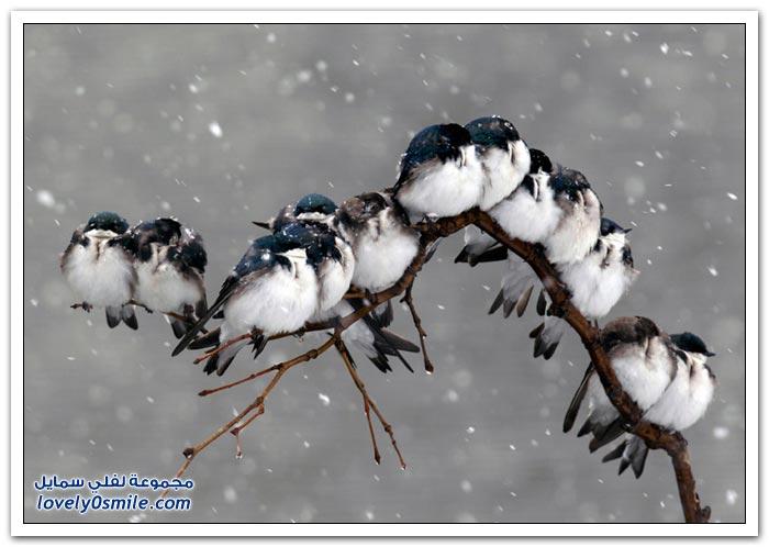 أفضل الصور الطبيعة لعام 2012