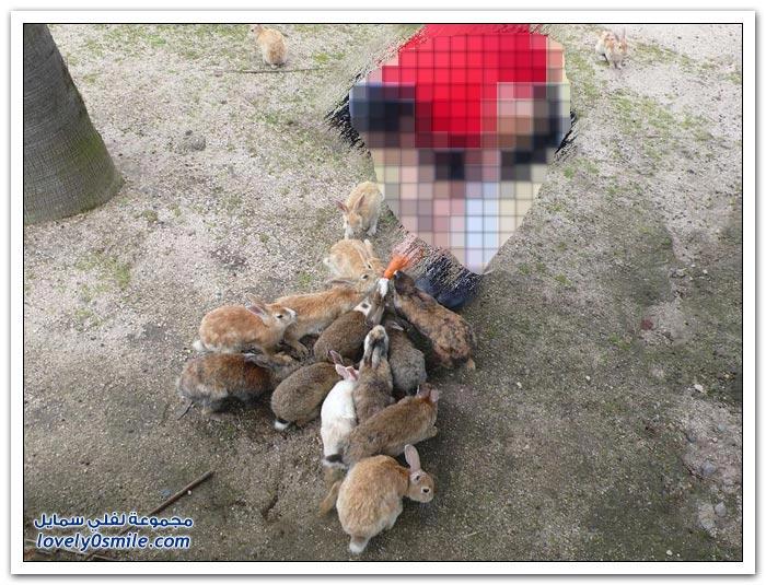 أوكونيشيما جزيرة الأرانب السامة