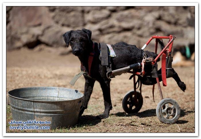 مأوى للكلاب ذوي الإعاقة في مكسيكو سيتي
