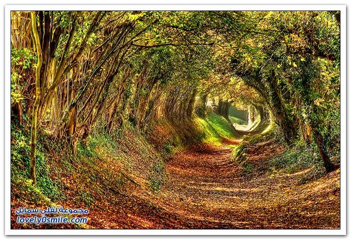 نفق رائع من حوله الأشجار في انجلترا