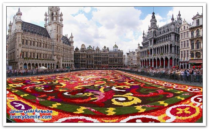 سجاد من الأزهار الجميلة في بلجيكا