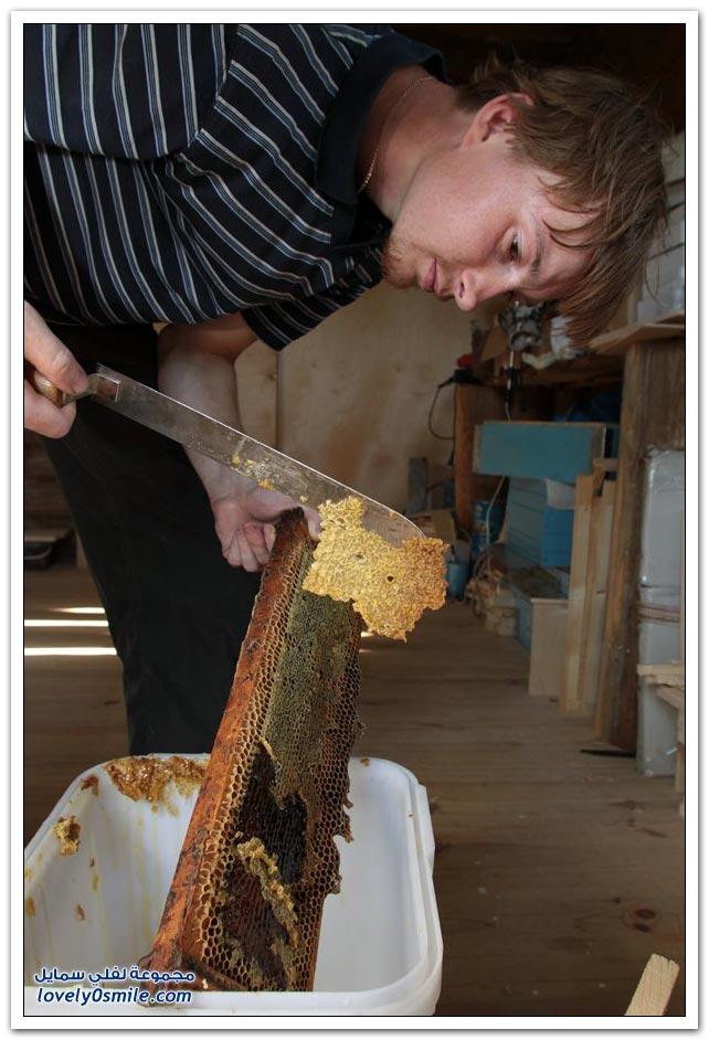 كيفية استخراج العسل