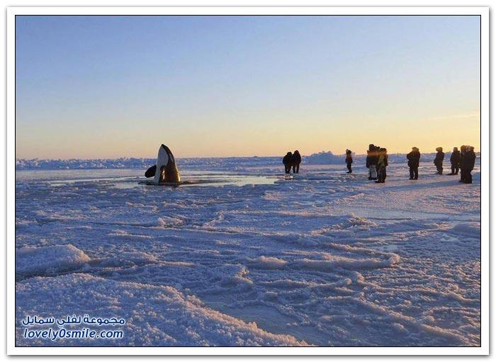 دلافين أوكرا في فصل الشتاء