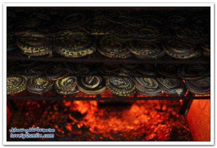 مسلخ الثعابين في جاوة في أندونيسيا لصناعة الحقائب